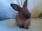 4 baby rabbits/ 3 9 months old - for sale/rehoming