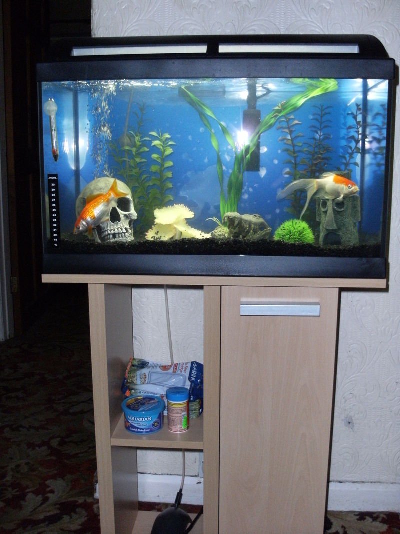 Fish Tanks For Sale Blackpool Fish Tank And Stand Blackpool Lancashire