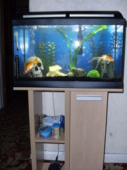 Marina 60 Fish Tank for sale